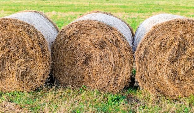 Prado de campo de paisagem rural com fardos de feno após a colheita.