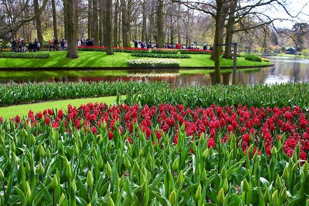 Prado de flores e lago do parque