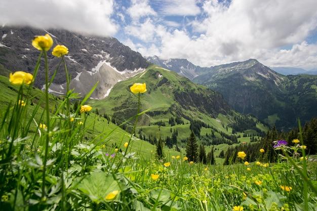 Prado de flores no alto das montanhas