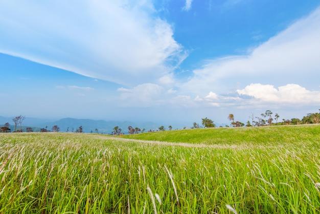 Prado de grama verde paisagem na montanha colina de inclinação