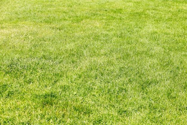 Prado de grama verde para usar como plano de fundo