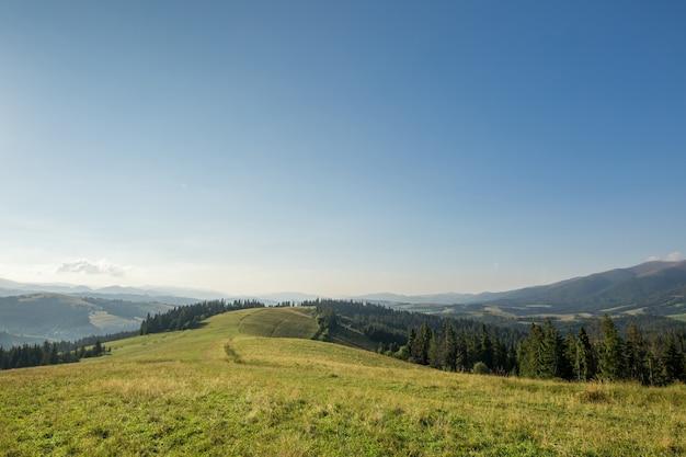 Prado de montanha com grama verde, trilha, floresta e montanhas