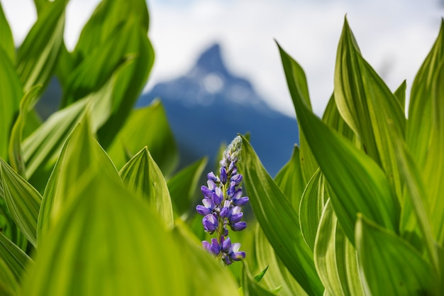 Prado de montanha em dia ensolarado. paisagem natural de verão. montanhas no alasca.