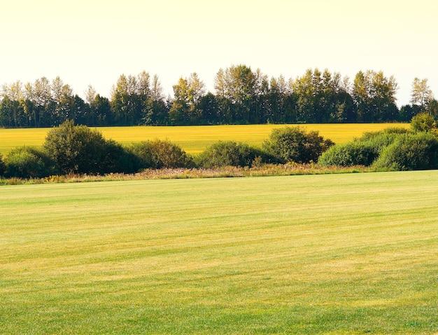 Prado de verão com arbustos dramáticos no fundo do horizonte