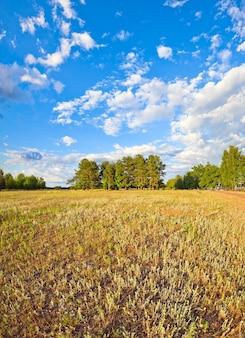Prado de verão com céu de nuvens, campo com flores amarelas selvagens e lago à direita.