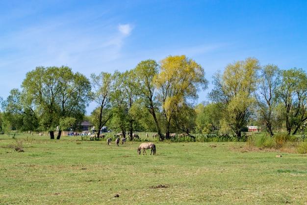 Prado e cavalos. paisagem rural