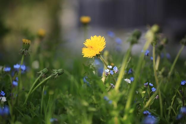 Prado floral fundo desfocado dia de verão