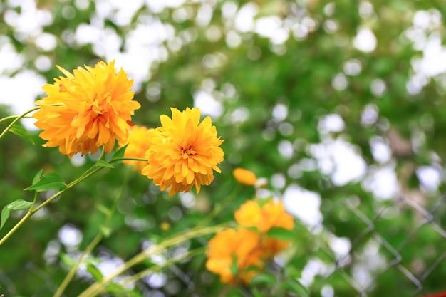 Prado floral outono desfocado