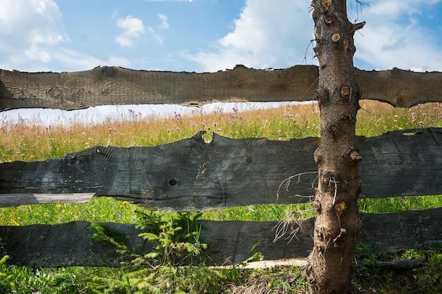 Prado florescendo atrás da velha cerca de madeira em um fundo de céu azul