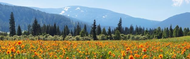 Prado florido de primavera no fundo de picos cobertos de neve
