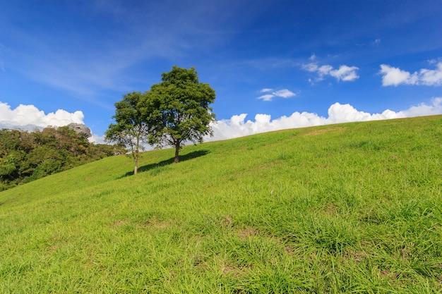 Prado largo com nuvens no céu azul em dia de sol