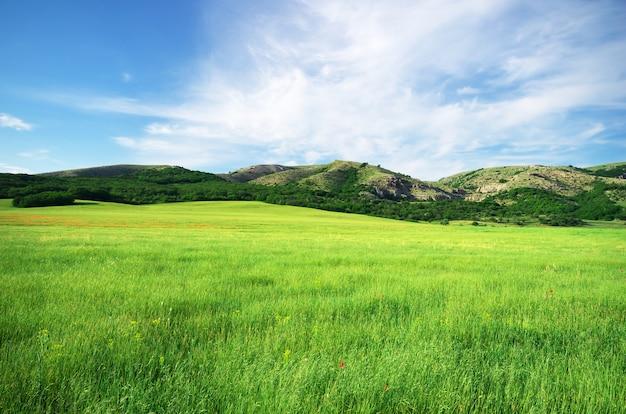Prado na montanha