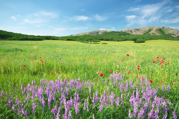 Prado primavera no prado.