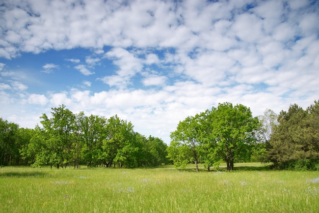 Prado verde e céu azul com floresta