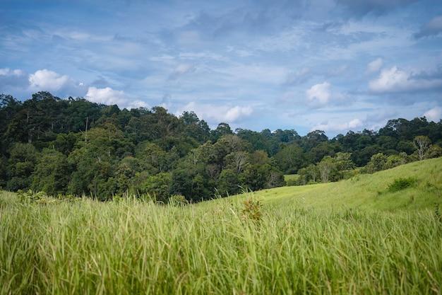 Prado verde e montanhas da floresta tropical no parque nacional de khao yai. área do patrimônio mundial da unesco, tailândia invisível. ecoturismo e turismo para estudar a vida da vida selvagem no parque nacional khao yai.