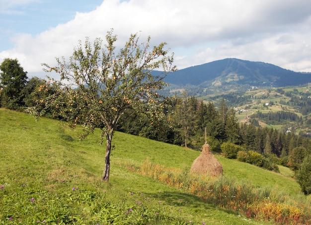 Prado verde montanhoso de verão com pilhas de feno e macieira