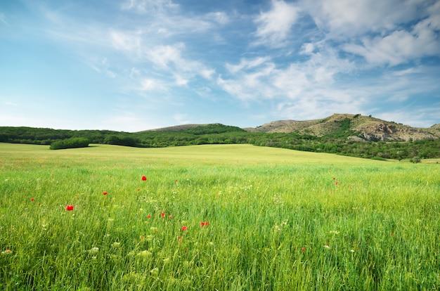 Prado verde primavera
