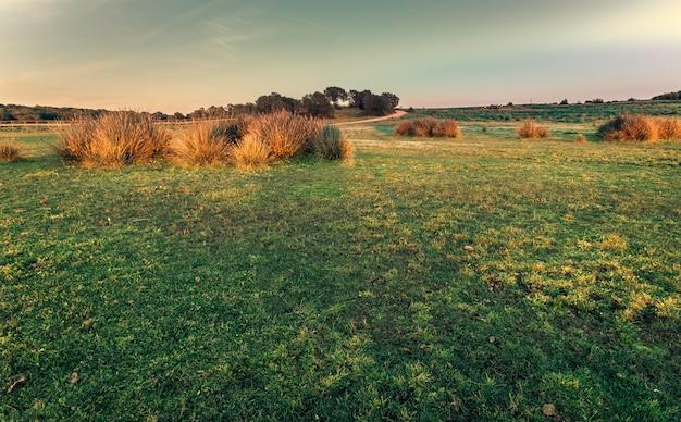Prado verde, rodeado por arbustos em um belo dia ensolarado de primavera