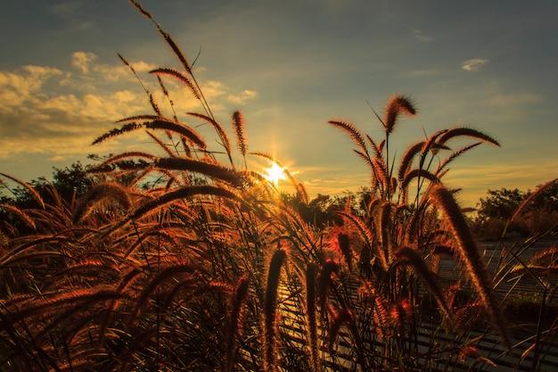 Prados em primeiro plano e o sol no dia de sol, edite o tom quente