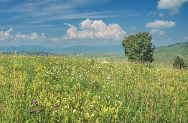 Prados floridos de montanha, colinas e céu azul com nuvens