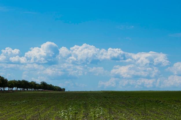 Prados verdes bonitos sob um céu nublado no início do verão