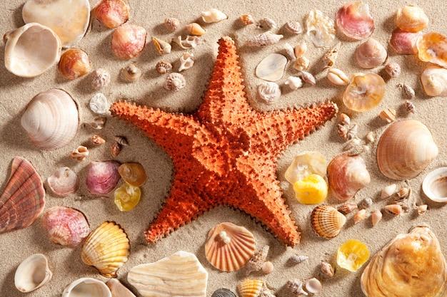 Praia branco areia estrela do mar muitos molusco conchas verão
