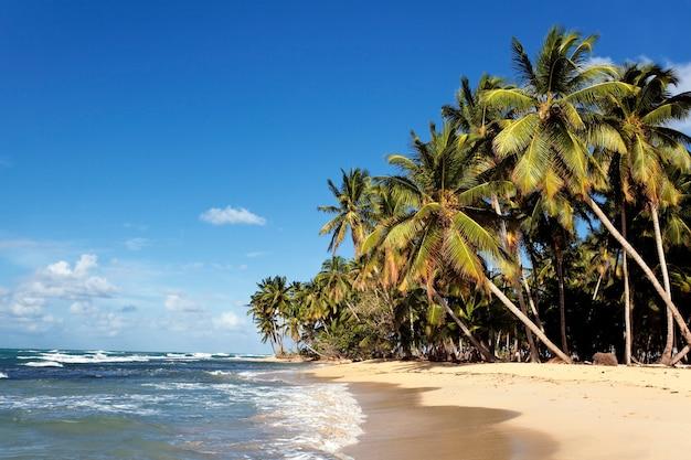 Praia caribenha com palmeiras e céu azul