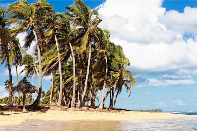 Praia caribenha com vento em palmeiras e nuvens