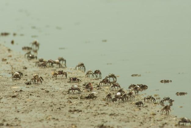 Praia cheia de caranguejos, cercada pelo mar sob a luz solar