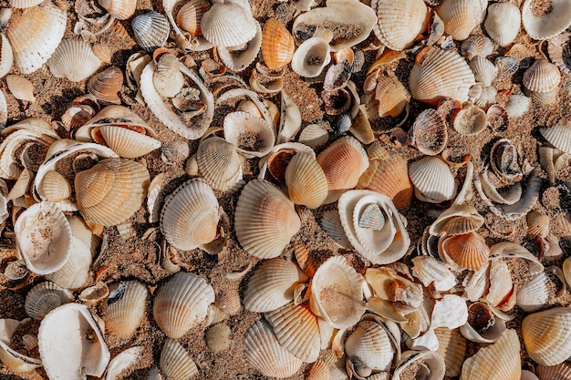 Praia coberta de conchas, textura de fundo de conchas