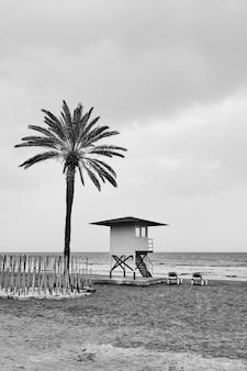 Praia com palmeiras e salva-vidas à beira-mar na baixa temporada - fotografia em preto e branco
