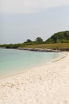 Praia com plantas e palmeiras. o fundo de areia amarela do oceano. espuma do mar e ondas correndo em terra