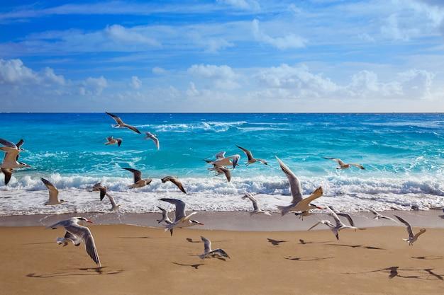 Praia da ilha de cantor em palm beach florida us
