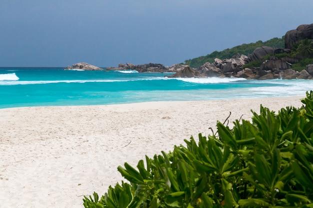 Praia de areia branca e paisagem marítima com ondas, plantas verdes e rochas