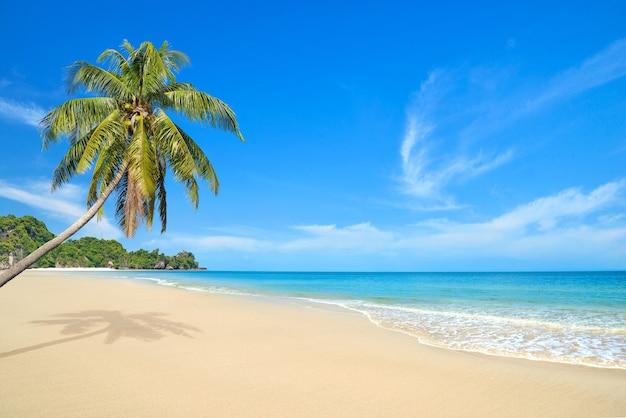 Praia de areia de verão com coqueiro em um dia claro.