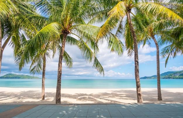 Praia de areia e palmeiras