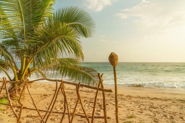 Praia de areia no oceano com coqueiros