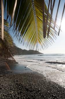 Praia de areia seixo olhando por cima do oceano brilhante através de folhas de palmeiras