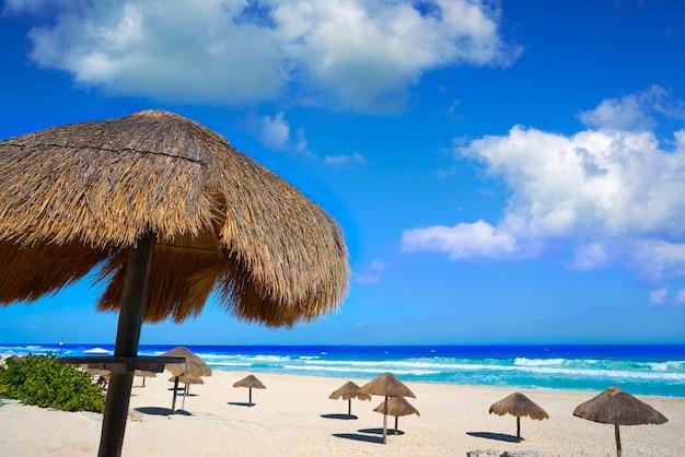 Praia de cancun delfines na zona hoteleira do méxico