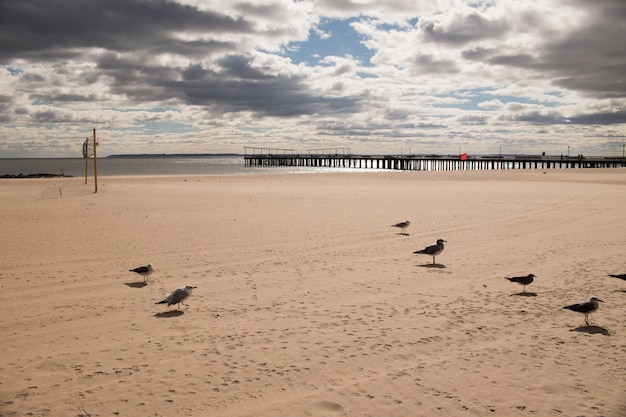 Praia de coney island