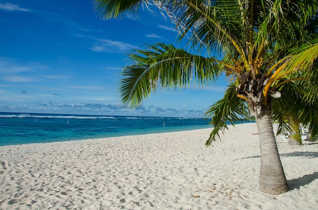 Praia de falealupo cercada por palmeiras e mar sob um céu azul em samoa