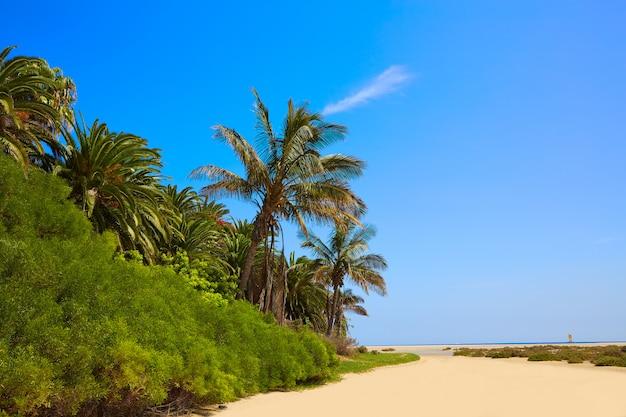 Praia de jandia sotavento fuerteventura canárias