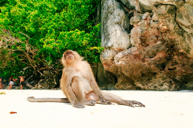 Praia de macaco, ilhas phi phi, tailândia