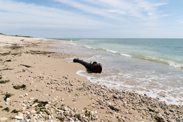 Praia de madeira flutuante no sudoeste da frança em isle de re