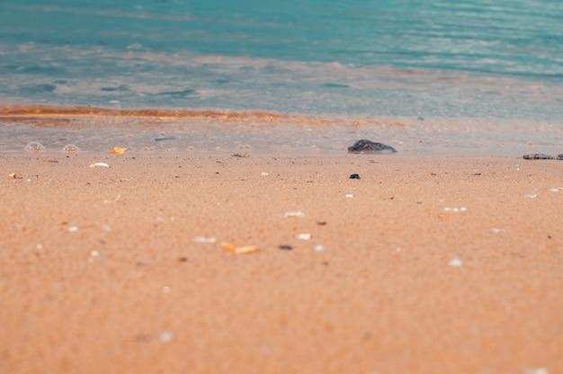 Praia de mar nos trópicos e as ondas suaves do dia azul do oceano do verão sombrio e praia de areia com ...