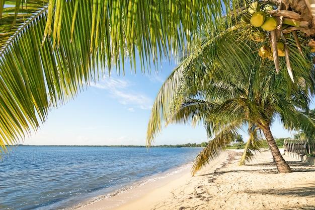 Praia de palmeiras e mar azul-turquesa em playa larga em cuba