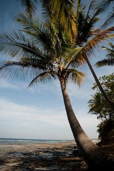 Praia e treeline costa rica