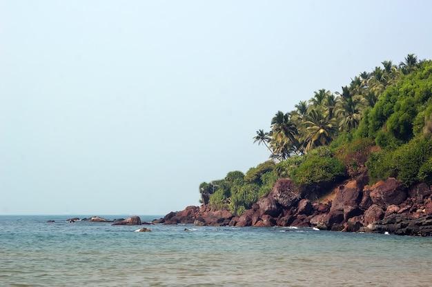Praia íngreme e rochosa com palmeiras. índia. goa