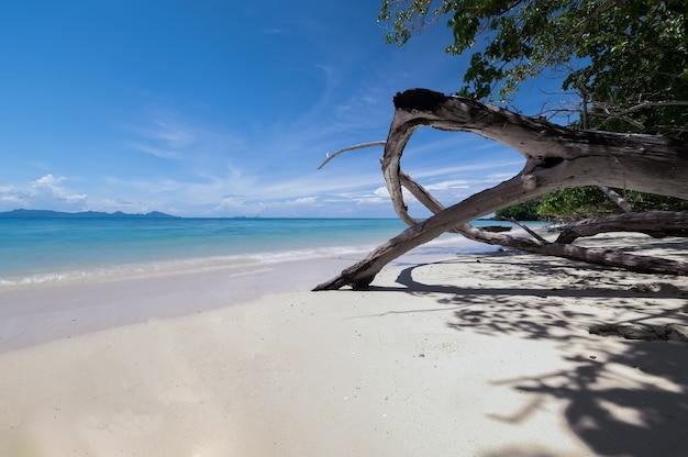 Praia linda com água azul e raiz de árvore