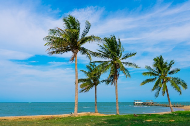 Praia, mar com palmeiras de coco durante a temporada de verão com nuvens.